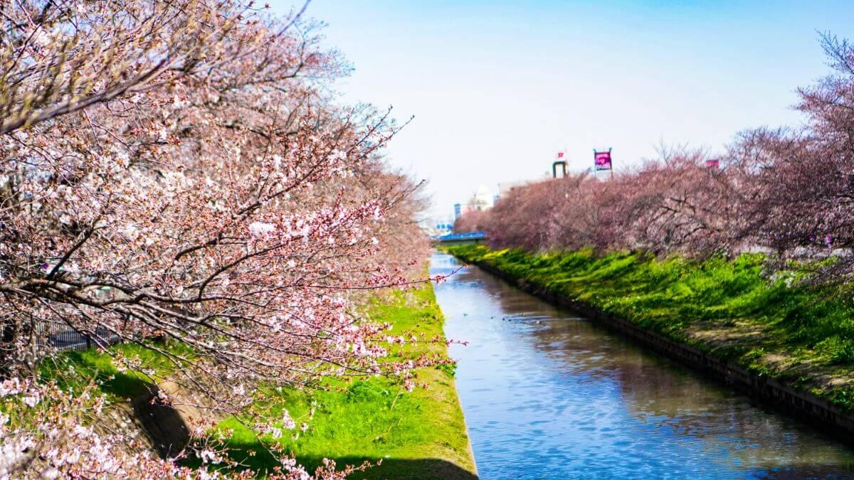 大仙波の新河岸川