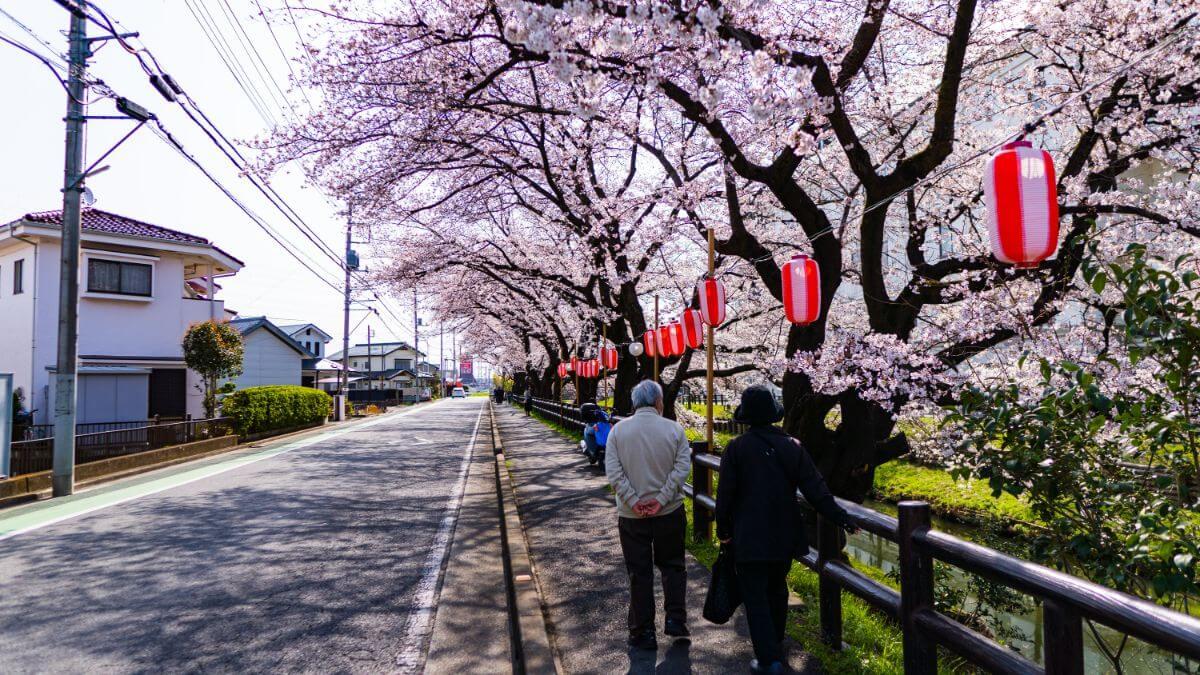 氷川神社の桜並木